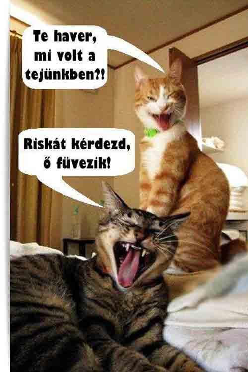 vicces állatos cicás kép
